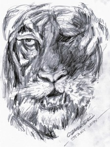 Stary tygrys